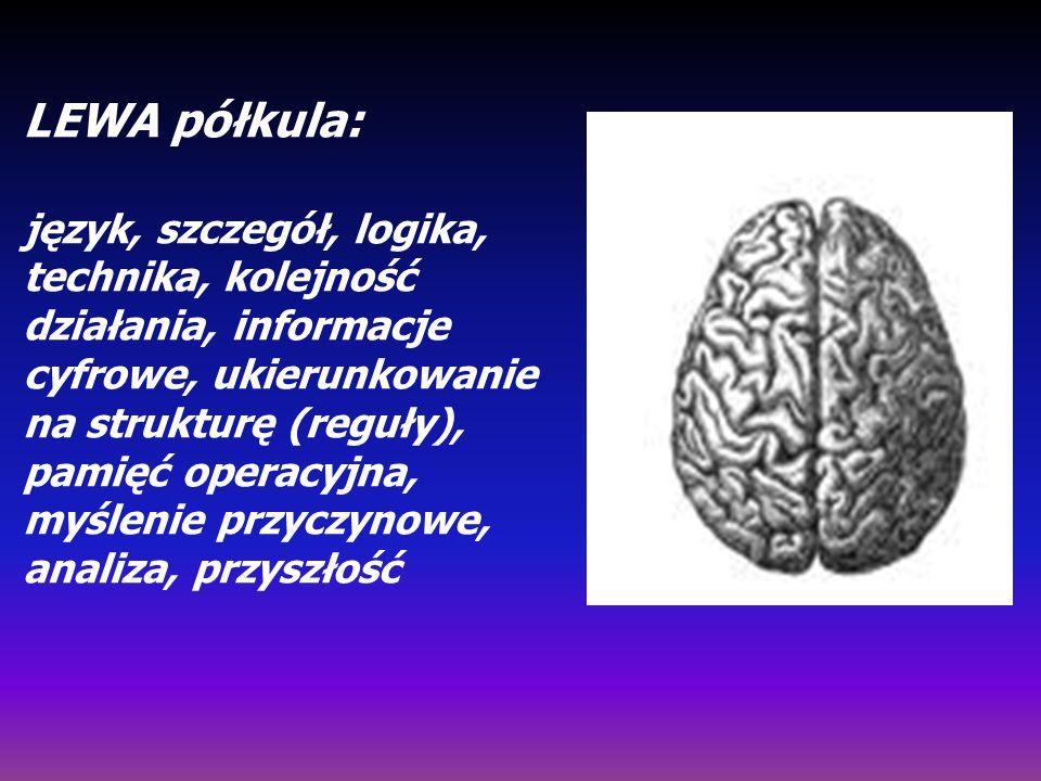 LEWA półkula: język, szczegół, logika, technika, kolejność działania, informacje cyfrowe, ukierunkowanie na strukturę (reguły), pamięć operacyjna, myś