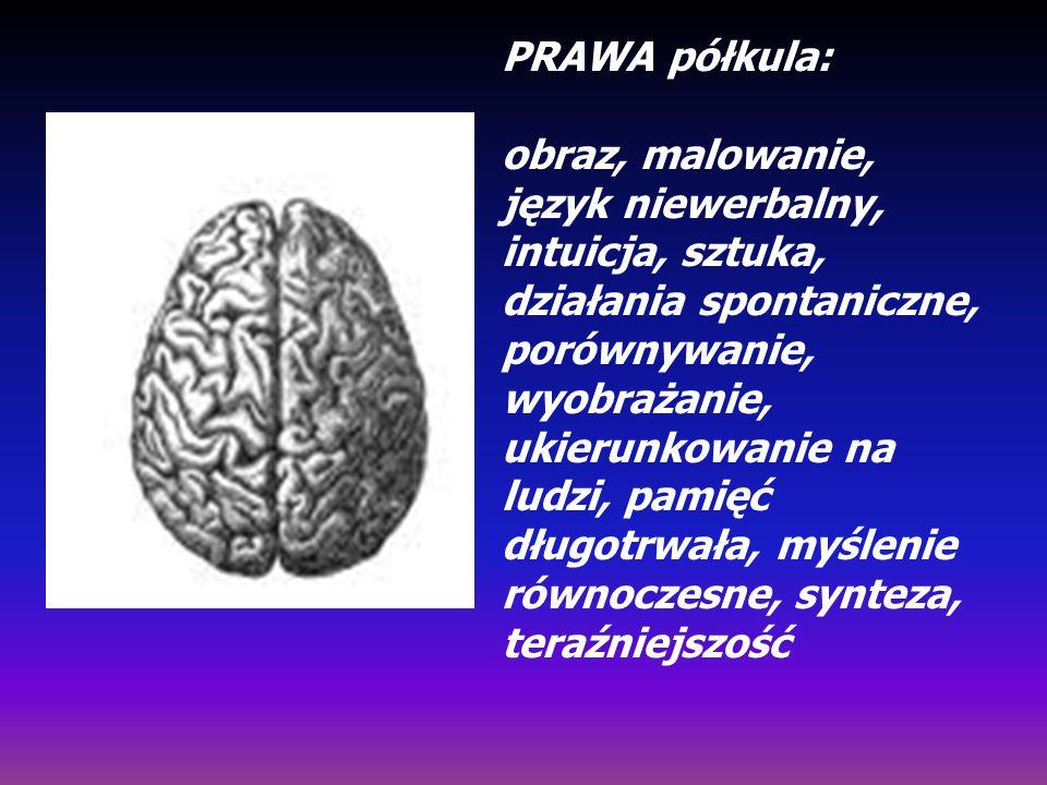 PRAWA półkula: obraz, malowanie, język niewerbalny, intuicja, sztuka, działania spontaniczne, porównywanie, wyobrażanie, ukierunkowanie na ludzi, pami