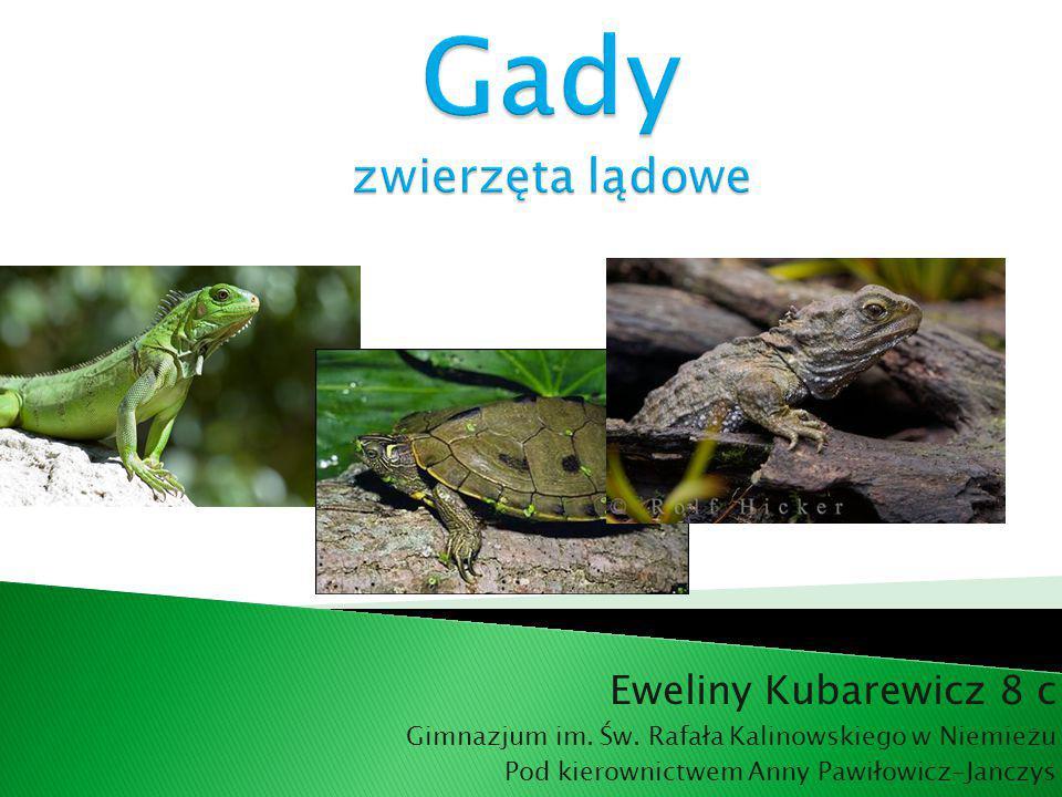 Gady jest to parafiletyczna grupa zmiennocieplnych owodniowców.