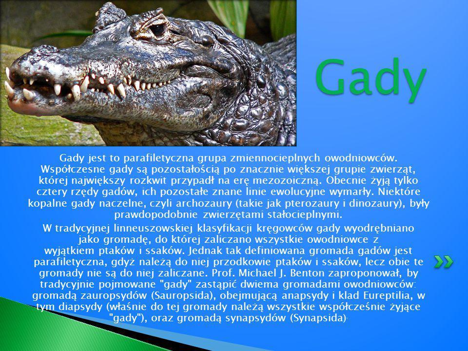 Liczbę gatunków gadów żyjących współcześnie szacuje się na ponad 9000 i zalicza do czterech rzędów: Testudines – żółwie Crocodilia – krokodyle Sphenodontia – sfenodonty (hatteria) Squamata – łuskonośne (jaszczurki, amfisbeny i węże) W Polsce żyje 9 gatunków.