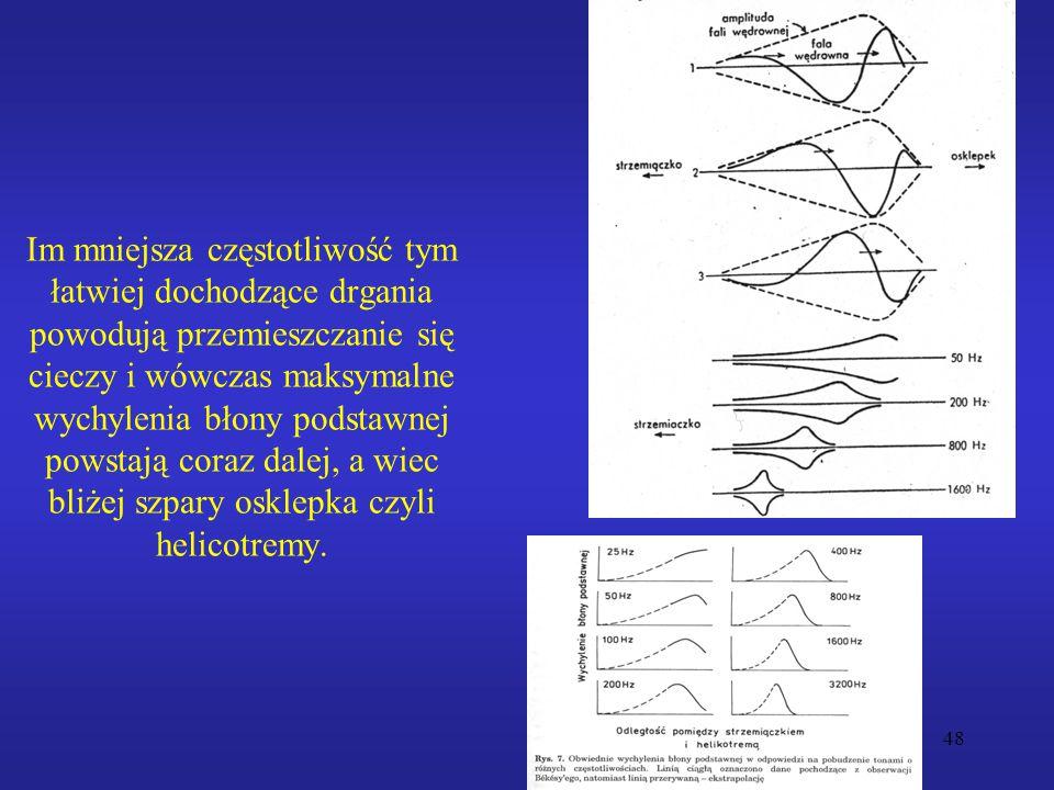 48 Im mniejsza częstotliwość tym łatwiej dochodzące drgania powodują przemieszczanie się cieczy i wówczas maksymalne wychylenia błony podstawnej powstają coraz dalej, a wiec bliżej szpary osklepka czyli helicotremy.