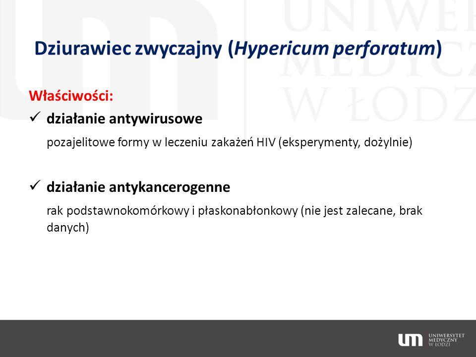 Dziurawiec zwyczajny (Hypericum perforatum) Właściwości: działanie antywirusowe pozajelitowe formy w leczeniu zakażeń HIV (eksperymenty, dożylnie) dzi