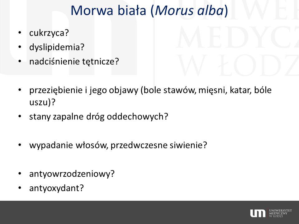 Morwa biała (Morus alba) cukrzyca? dyslipidemia? nadciśnienie tętnicze? przeziębienie i jego objawy (bole stawów, mięsni, katar, bóle uszu)? stany zap