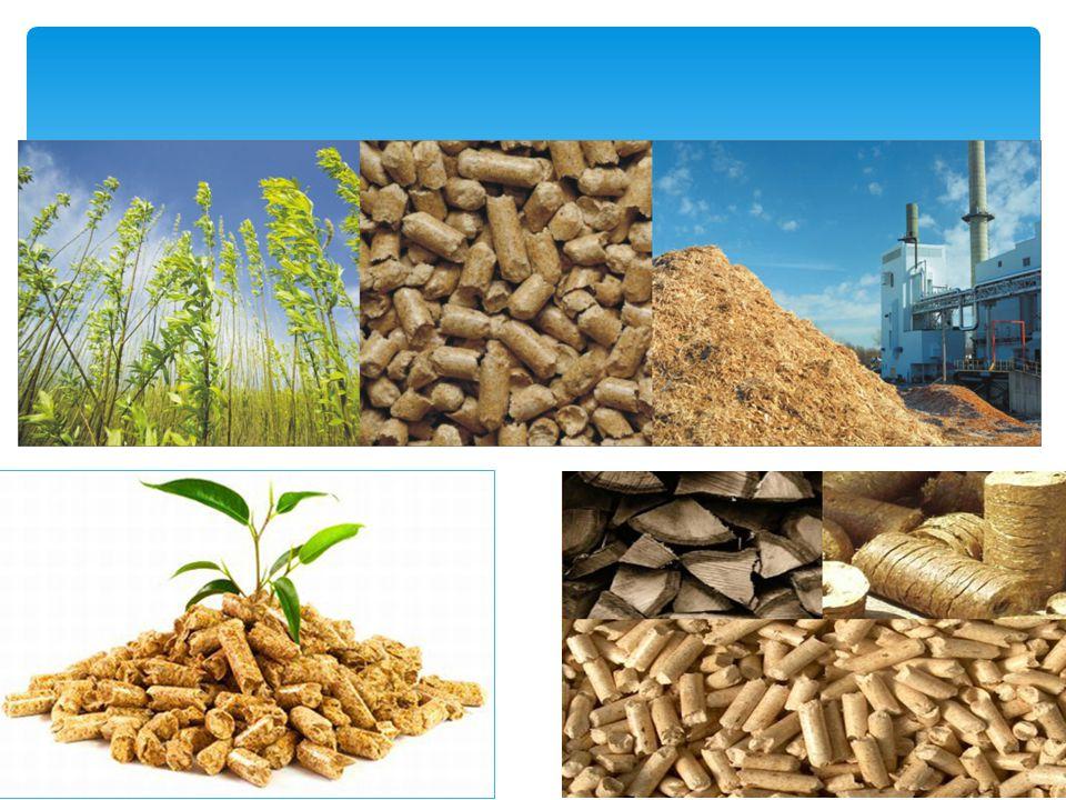Produkcja biomasy Poprzez fotosyntezę energia słoneczna jest akumulowana w biomasie, początkowo organizmów roślinnych, później w łańcuchu pokarmowym także zwierzęcych.