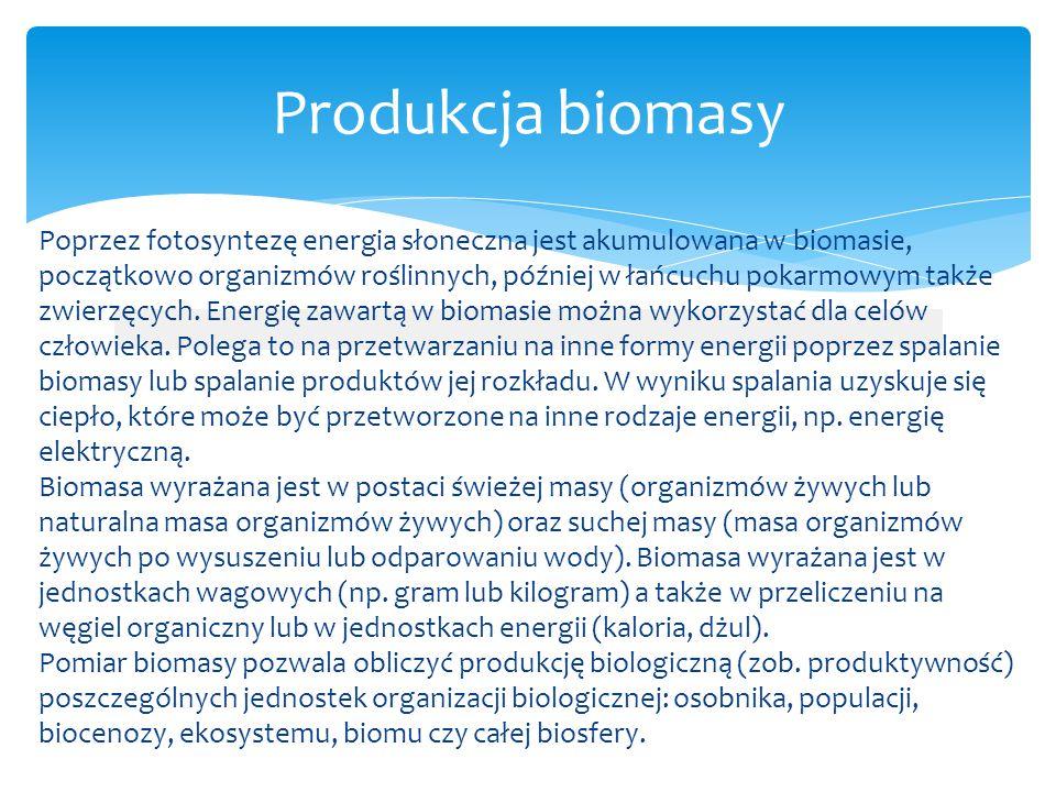 Produkcja biomasy Poprzez fotosyntezę energia słoneczna jest akumulowana w biomasie, początkowo organizmów roślinnych, później w łańcuchu pokarmowym t
