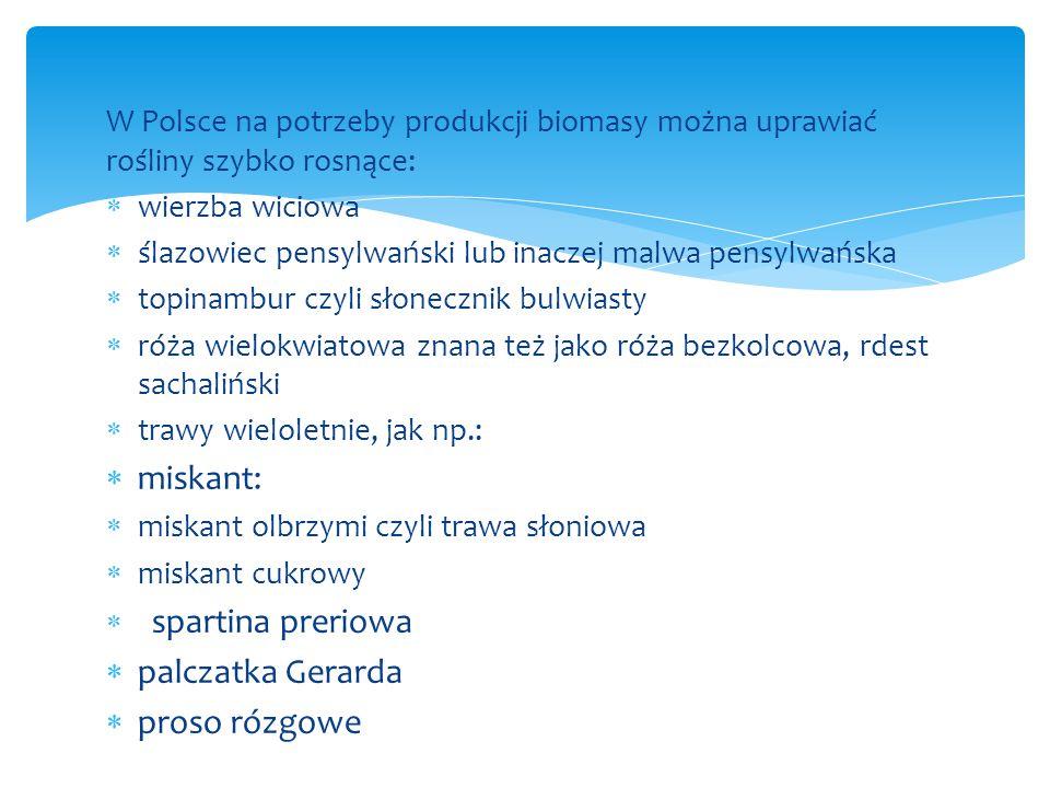 W Polsce na potrzeby produkcji biomasy można uprawiać rośliny szybko rosnące:  wierzba wiciowa  ślazowiec pensylwański lub inaczej malwa pensylwańsk