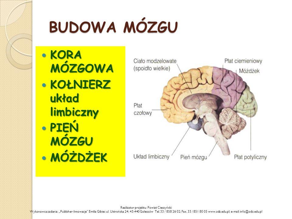 BUDOWA MÓZGU KORA MÓZGOWA KORA MÓZGOWA KOŁNIERZ układ limbiczny KOŁNIERZ układ limbiczny PIEŃ MÓZGU PIEŃ MÓZGU MÓŻDŻEK MÓŻDŻEK Realizator projektu: Po