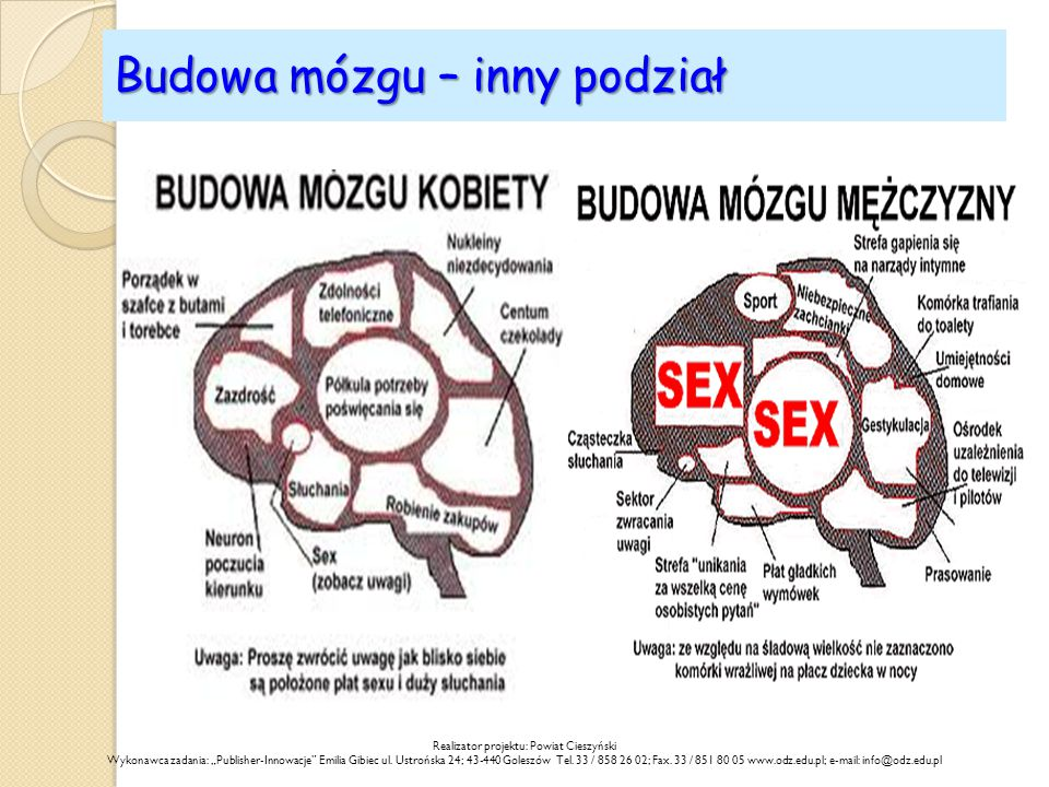 """Budowa mózgu – inny podział Realizator projektu: Powiat Cieszyński Wykonawca zadania: """"Publisher-Innowacje"""" Emilia Gibiec ul. Ustrońska 24; 43-440 Gol"""