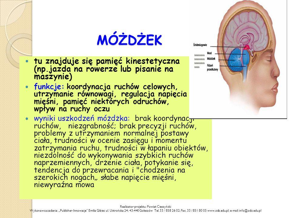 """MÓŻDŻEK tu znajduje się pamięć kinestetyczna (np.jazda na rowerze lub pisanie na maszynie) funkcje: koordynacja ruchów celowych, utrzymanie równowagi, regulacja napięcia mięśni, pamięć niektórych odruchów, wpływ na ruchy oczu wyniki uszkodzeń móżdżka: brak koordynacji ruchów, niezgrabność; brak precyzji ruchów, problemy z utrzymaniem normalnej postawy ciała, trudności w ocenie zasięgu i momentu zatrzymania ruchu, trudności w łapaniu obiektów, niezdolność do wykonywania szybkich ruchów naprzemiennych, drżenie ciała, potykanie się, tendencja do przewracania i chodzenia na szerokich nogach"""" słabe napięcie mięśni, niewyraźna mowa Realizator projektu: Powiat Cieszyński Wykonawca zadania: """"Publisher-Innowacje Emilia Gibiec ul."""