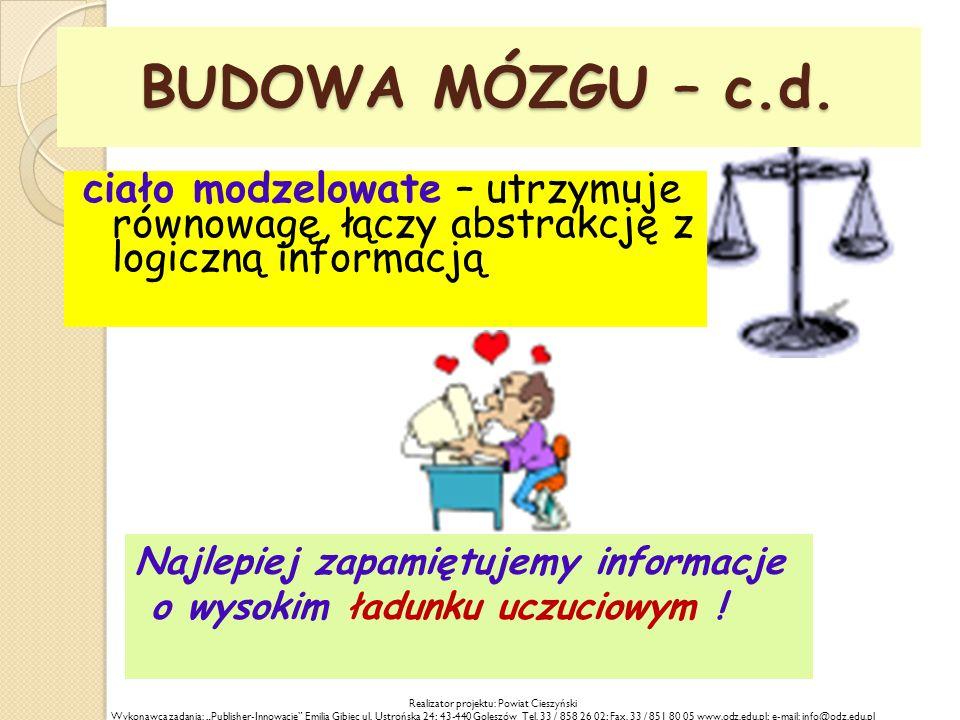 BUDOWA MÓZGU – c.d.