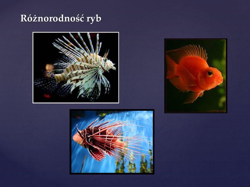 Różnorodność ryb