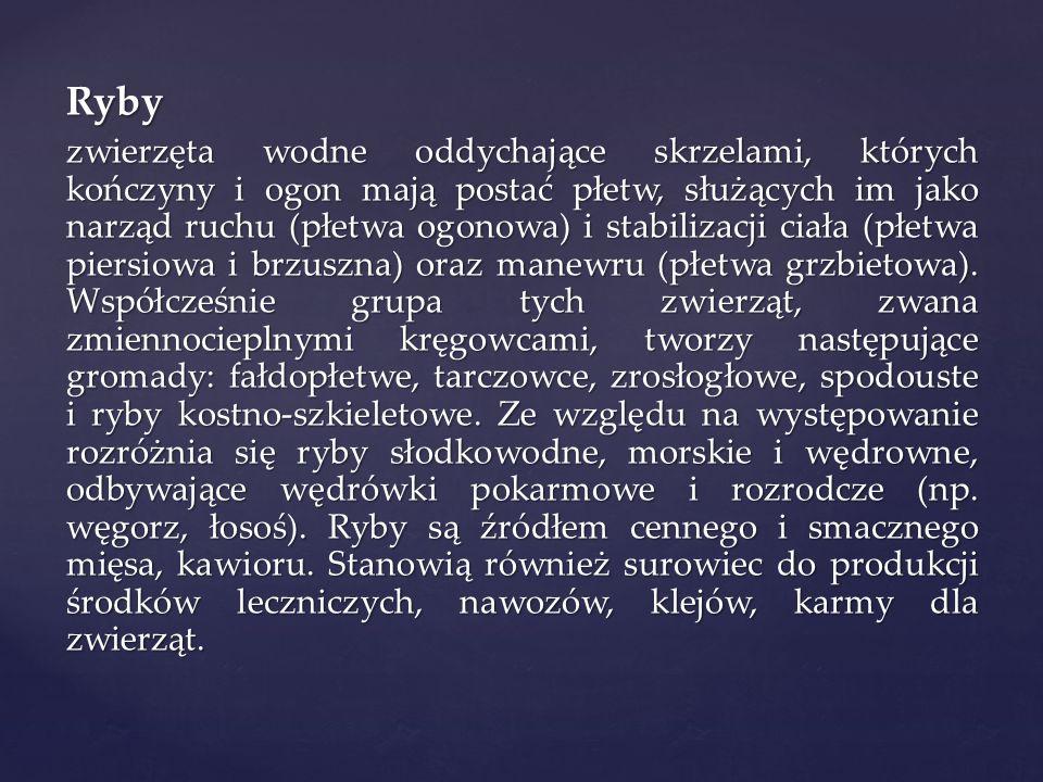 Bibliografia M.Jefimow, M. Sęktas, Puls Życia 1, Podręcznik dla gimnazjum, Nowa Era, 2009, s.