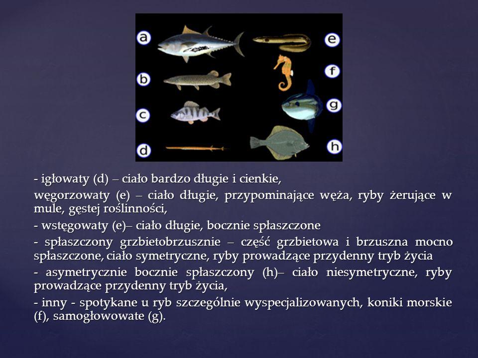 - ciało pokryte śluzem i łuskami ułożonymi dachówkowato u wielu gatunków kolor łusek pełni funkcję maskującą.