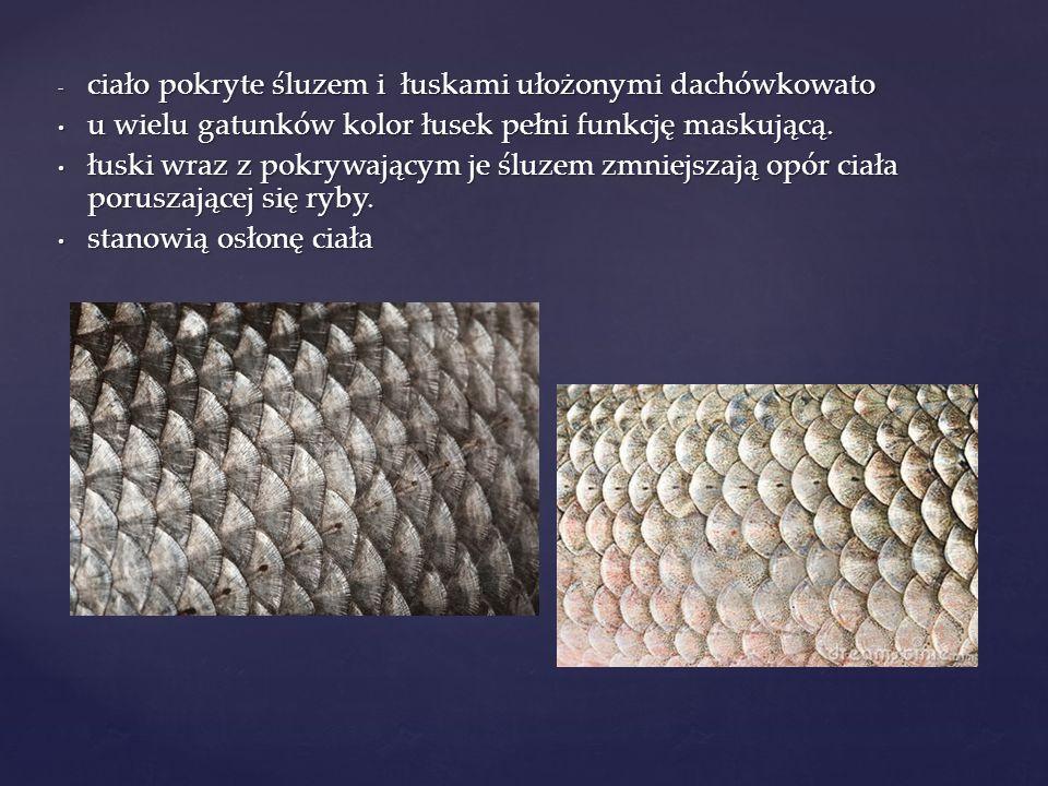 Znaczenie w przyrodzie i życiu człowieka Ryby stanowią bardzo ważny element środowiska przyrodniczego.