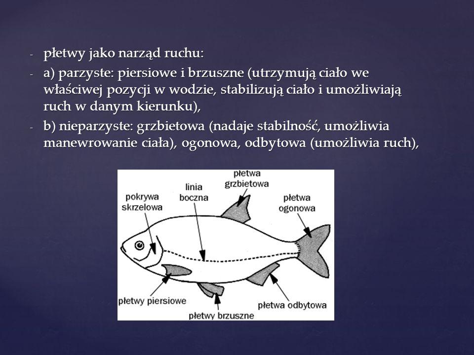 - płetwy jako narząd ruchu: - a) parzyste: piersiowe i brzuszne (utrzymują ciało we właściwej pozycji w wodzie, stabilizują ciało i umożliwiają ruch w danym kierunku), - b) nieparzyste: grzbietowa (nadaje stabilność, umożliwia manewrowanie ciała), ogonowa, odbytowa (umożliwia ruch),
