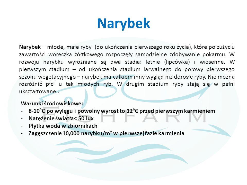 Narybek Narybek – młode, małe ryby (do ukończenia pierwszego roku życia), które po zużyciu zawartości woreczka żółtkowego rozpoczęły samodzielne zdoby