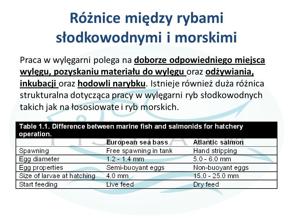 Różnice między rybami słodkowodnymi i morskimi Praca w wylęgarni polega na doborze odpowiedniego miejsca wylęgu, pozyskaniu materiału do wylęgu oraz o
