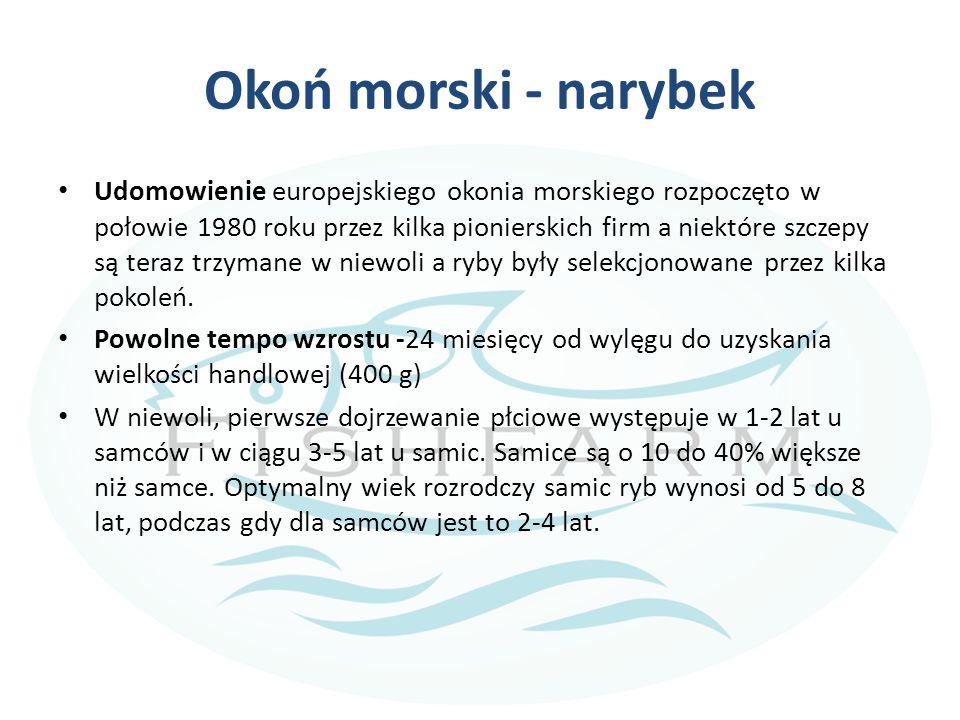 Okoń morski - narybek Udomowienie europejskiego okonia morskiego rozpoczęto w połowie 1980 roku przez kilka pionierskich firm a niektóre szczepy są te