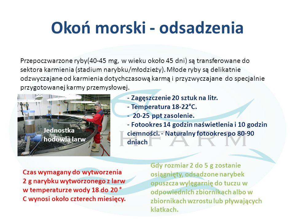 Okoń morski - odsadzenia Przepoczwarzone ryby(40-45 mg, w wieku około 45 dni) są transferowane do sektora karmienia (stadium narybku/młodzieży). Młode