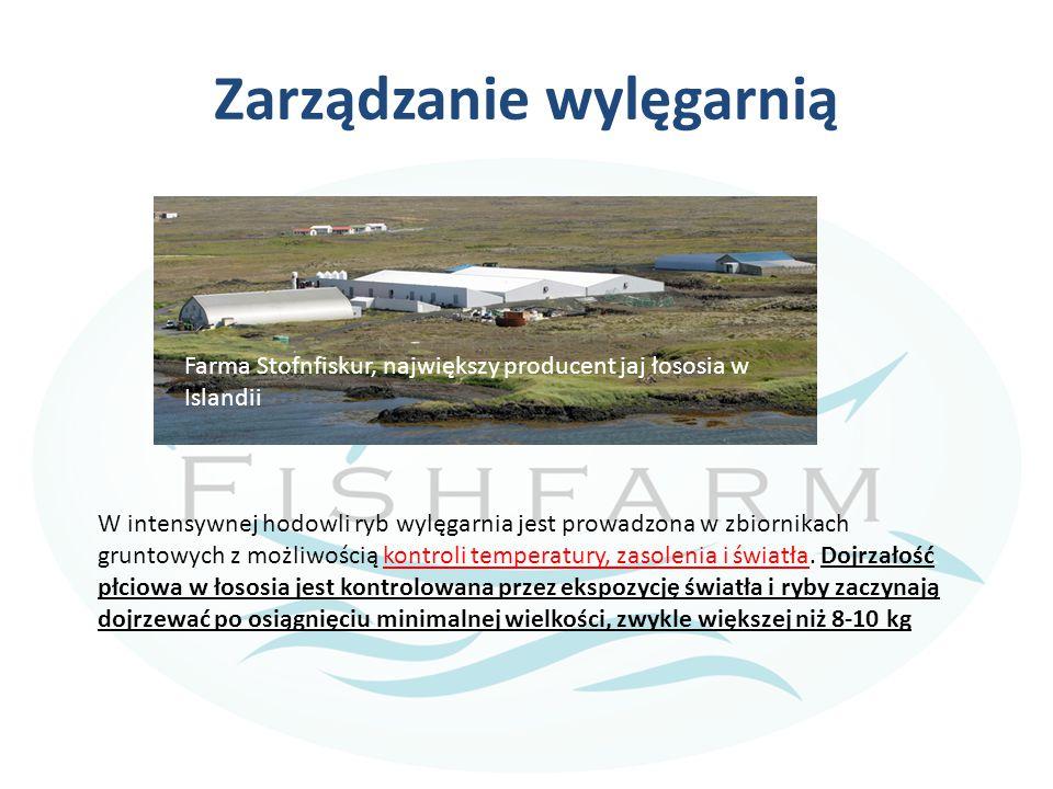 Zarządzanie wylęgarnią W intensywnej hodowli ryb wylęgarnia jest prowadzona w zbiornikach gruntowych z możliwością kontroli temperatury, zasolenia i ś