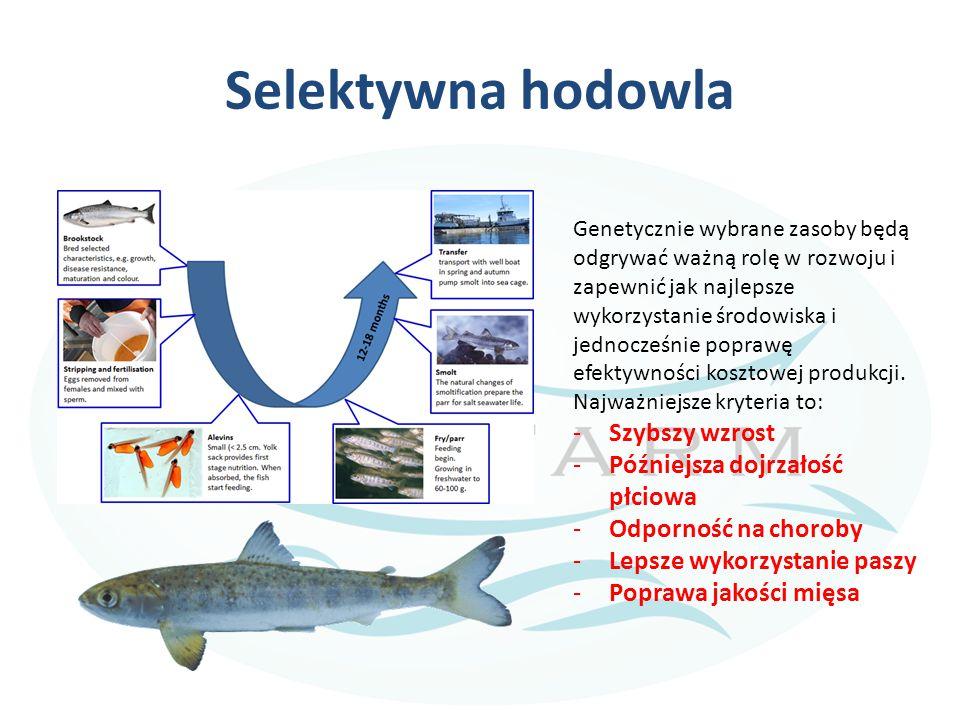 Selektywna hodowla Genetycznie wybrane zasoby będą odgrywać ważną rolę w rozwoju i zapewnić jak najlepsze wykorzystanie środowiska i jednocześnie popr