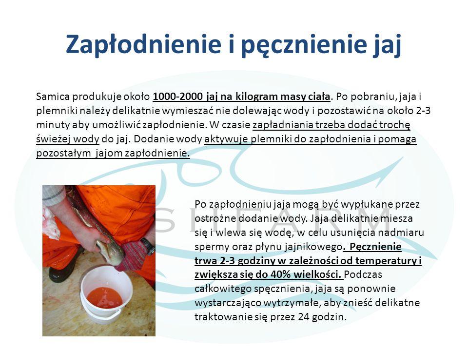 LINKI do kursu-05 Ksiązki i artykuły Büke, E.2002.
