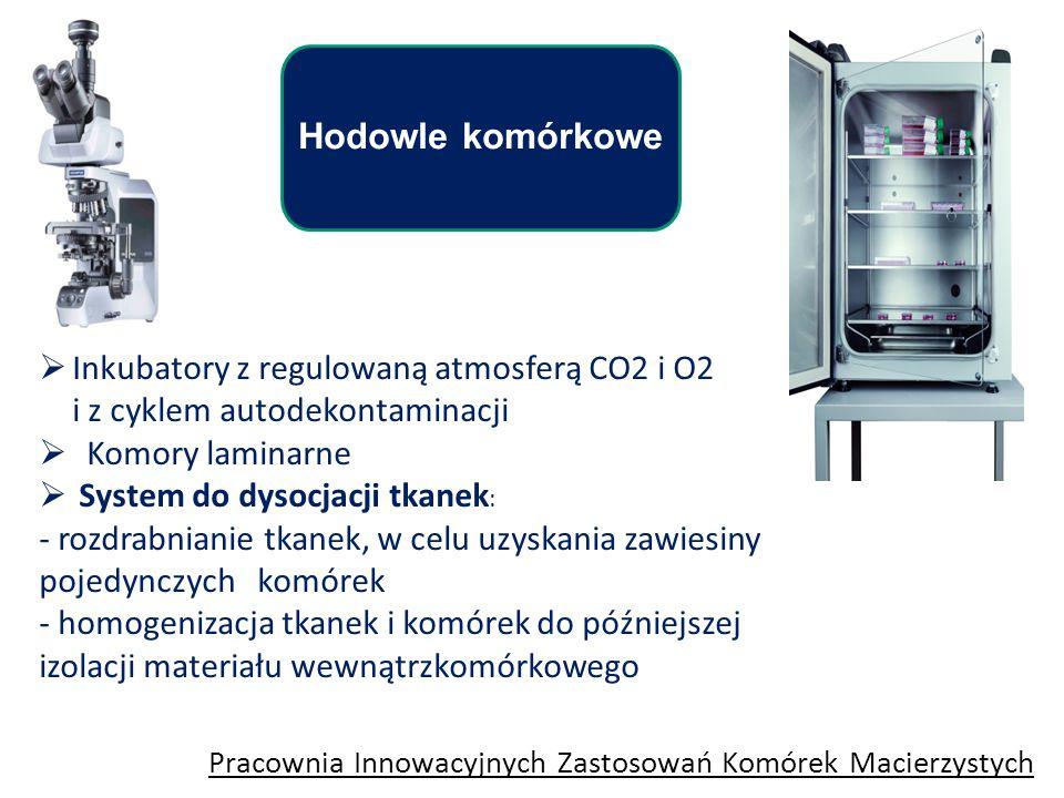 Hodowle komórkowe Pracownia Innowacyjnych Zastosowań Komórek Macierzystych  Inkubatory z regulowaną atmosferą CO2 i O2 i z cyklem autodekontaminacji