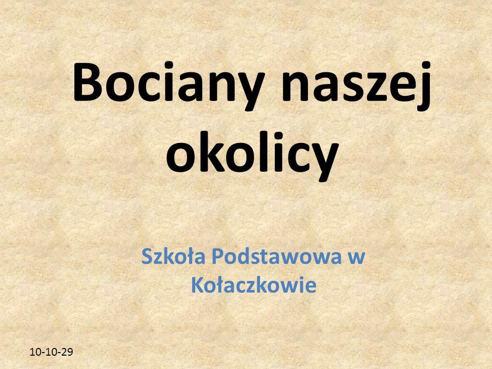 10-10-29 Szkoła Podstawowa w Kołaczkowie Bociany naszej okolicy