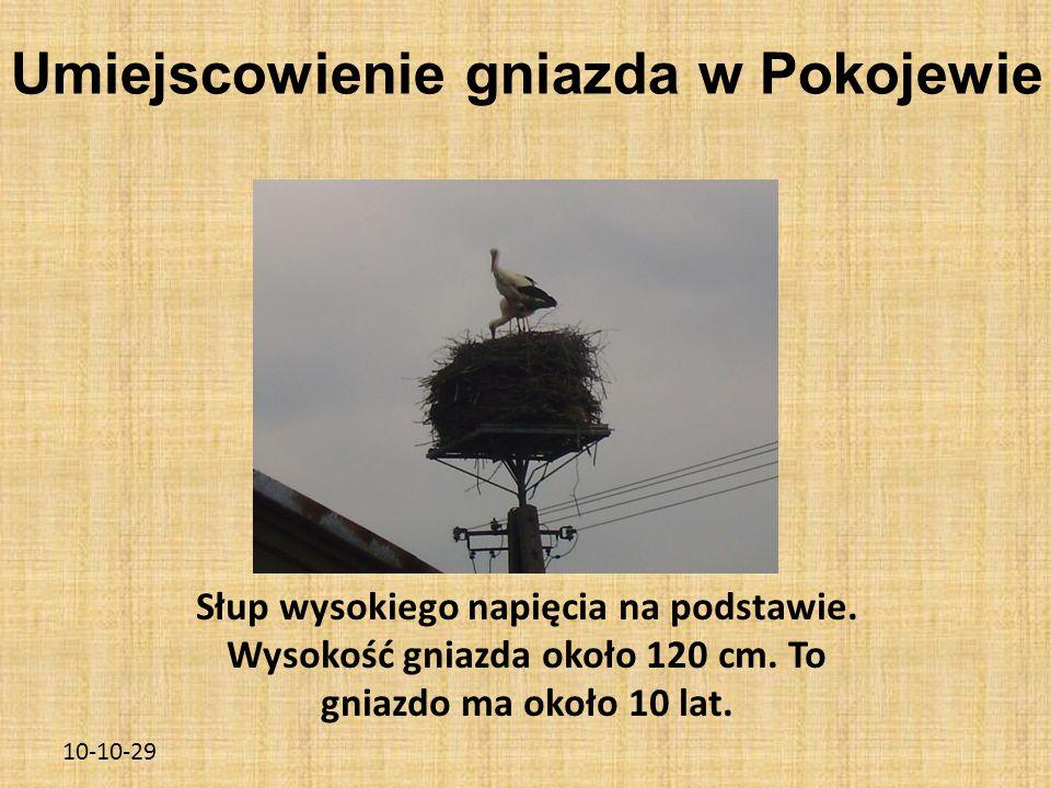 10-10-29 Umiejscowienie gniazda w Pokojewie Słup wysokiego napięcia na podstawie. Wysokość gniazda około 120 cm. To gniazdo ma około 10 lat.