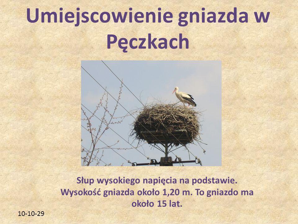 10-10-29 Umiejscowienie gniazda w Pęczkach Słup wysokiego napięcia na podstawie. Wysokość gniazda około 1,20 m. To gniazdo ma około 15 lat.