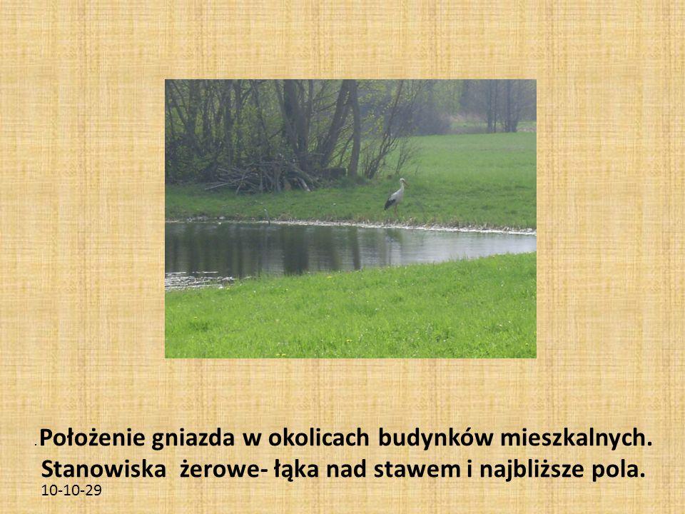 10-10-29. Położenie gniazda w okolicach budynków mieszkalnych. Stanowiska żerowe- łąka nad stawem i najbliższe pola.