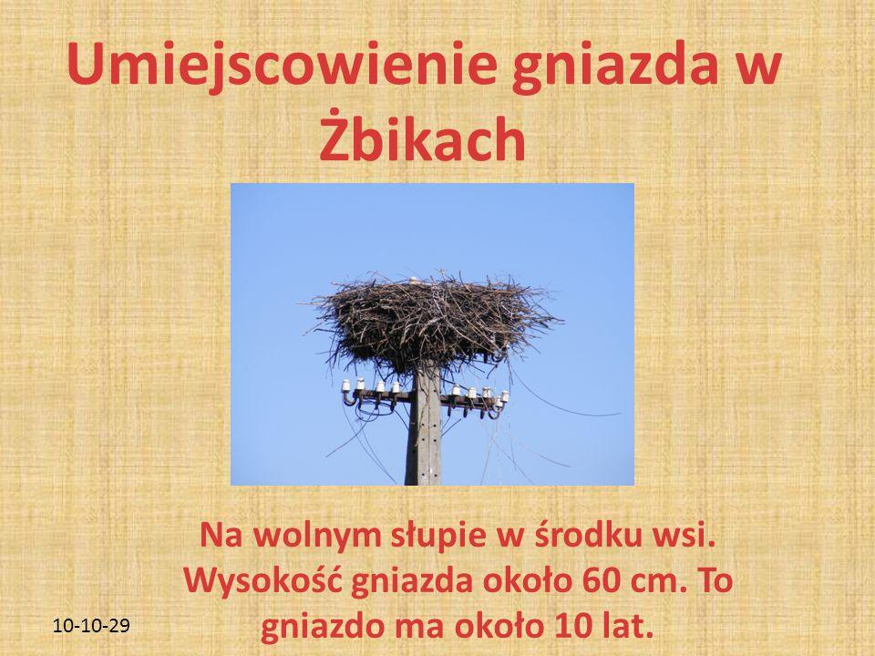 10-10-29 Umiejscowienie gniazda w Żbikach Na wolnym słupie w środku wsi. Wysokość gniazda około 60 cm. To gniazdo ma około 10 lat.