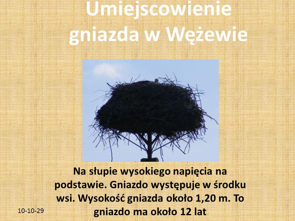 10-10-29 Umiejscowienie gniazda w Wężewie Na słupie wysokiego napięcia na podstawie.