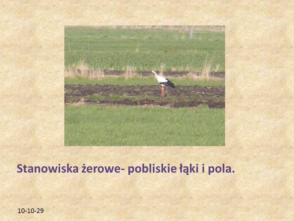 10-10-29 Stanowiska żerowe- pobliskie łąki i pola.