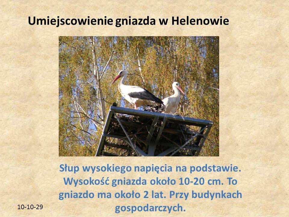10-10-29 Umiejscowienie gniazda w Helenowie Słup wysokiego napięcia na podstawie. Wysokość gniazda około 10-20 cm. To gniazdo ma około 2 lat. Przy bud