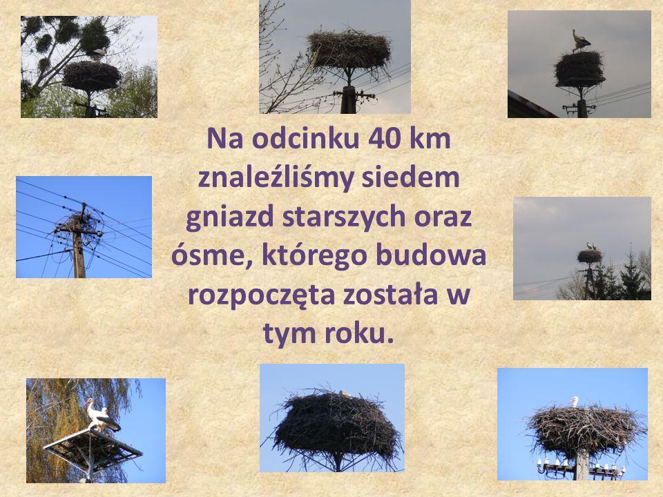 10-10-29 Na odcinku 40 km znaleźliśmy siedem gniazd starszych oraz ósme, którego budowa rozpoczęta została w tym roku.