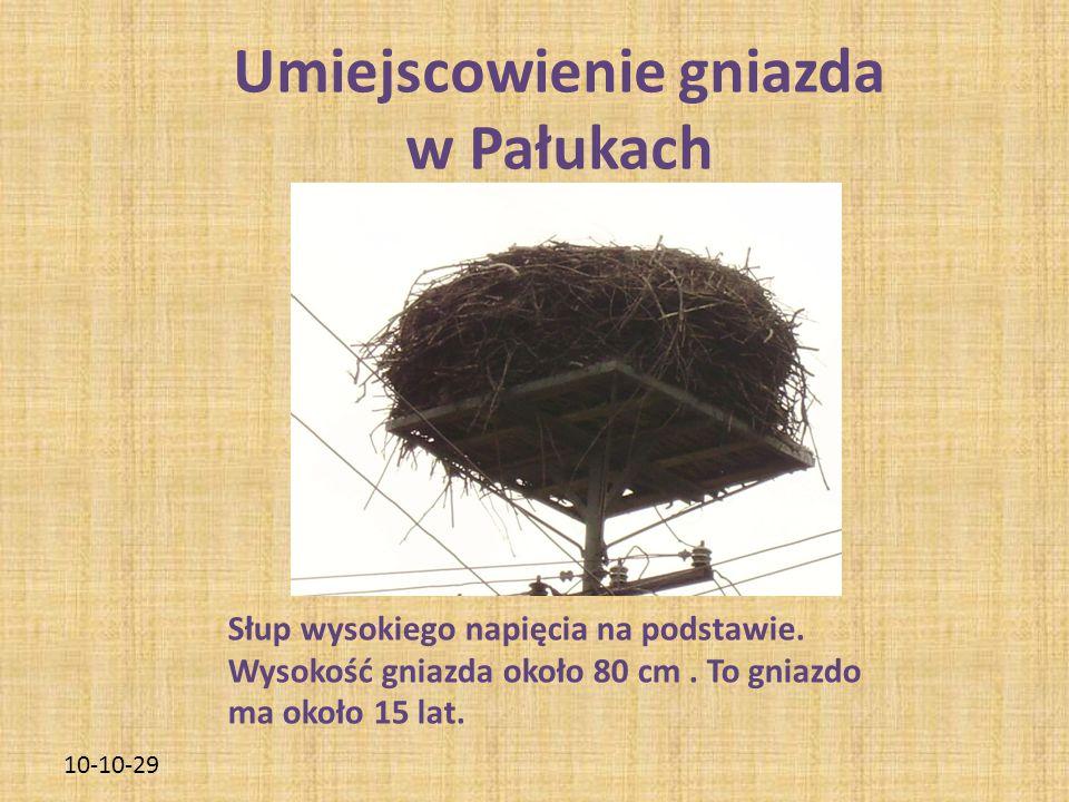 10-10-29 Umiejscowienie gniazda w Pałukach Słup wysokiego napięcia na podstawie. Wysokość gniazda około 80 cm. To gniazdo ma około 15 lat.