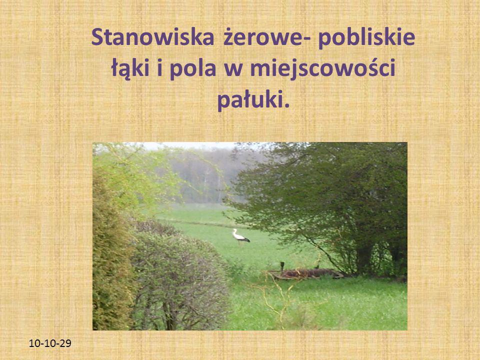 10-10-29 Stanowiska żerowe- pobliskie łąki i pola w miejscowości pałuki.