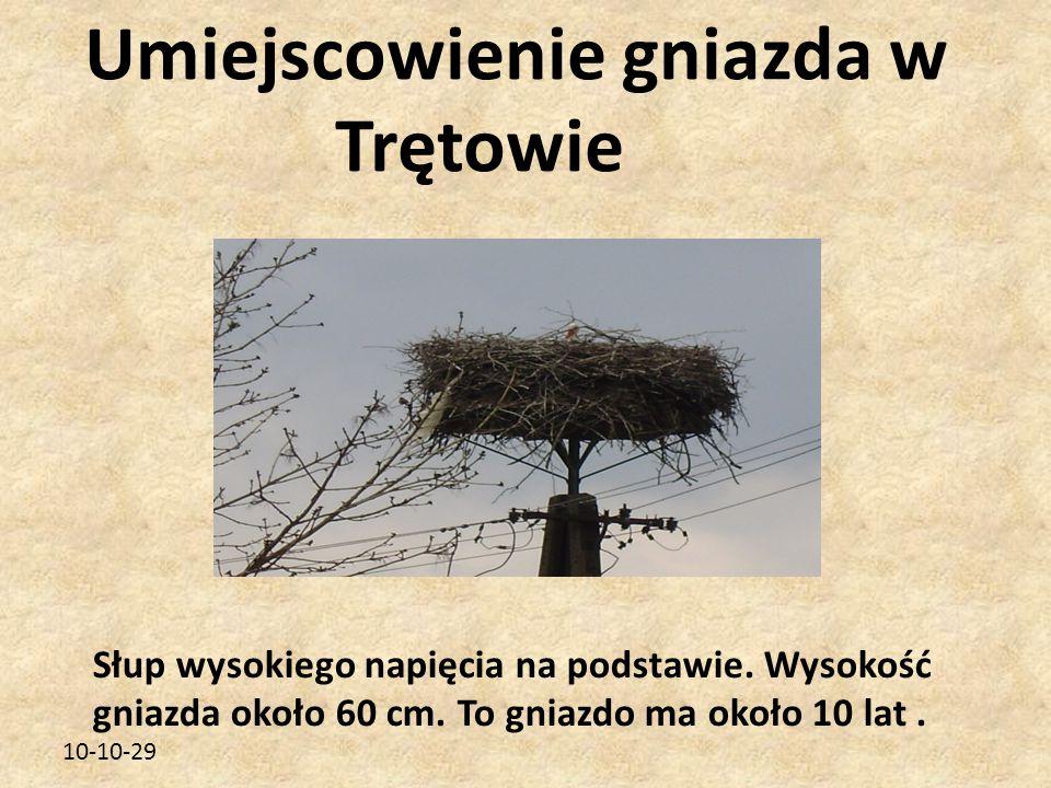 10-10-29 Umiejscowienie gniazda w Trętowie Słup wysokiego napięcia na podstawie. Wysokość gniazda około 60 cm. To gniazdo ma około 10 lat.