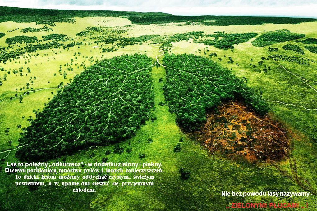 Aby cywilizacja nie zniszczyła najpiękniejszych zakątków naszego kraju, tworzy się rezerwaty i parki narodowe. Na ich terenach nie buduje się domów, d