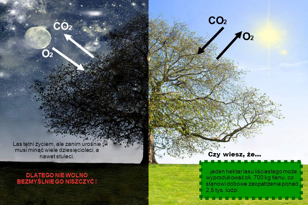 """Las to potężny """"odkurzacz"""" - w dodatku zielony i piękny. Drzewa pochłaniają mnóstwo pyłów i innych zanieczyszczeń. To dzięki lasom możemy oddychać czy"""