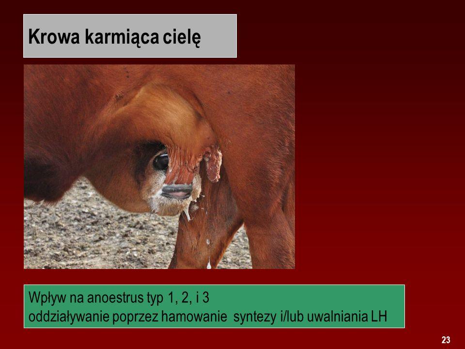 23 Krowa karmiąca cielę Wpływ na anoestrus typ 1, 2, i 3 oddziaływanie poprzez hamowanie syntezy i/lub uwalniania LH