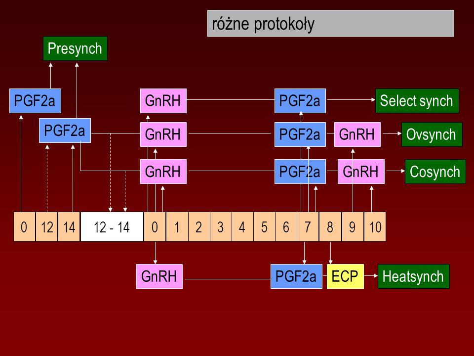 różne protokoły 12345607 89 12 - 1401412 GnRHSelect synchGnRH 10 OvsynchGnRH Cosynch GnRH PGF2a Presynch PGF2aECP Heatsynch