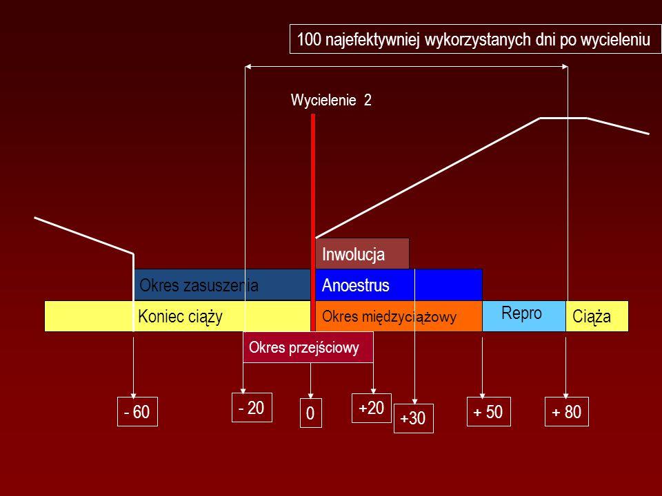 Inwolucja Okres między ciążowy Anoestrus Okres zasuszenia Koniec ciąży Ciąża 0 +30 + 50+ 80 Okres przejściowy +20 - 20 - 60 Repro Wycielenie 2 100 najefektywniej wykorzystanych dni po wycieleniu