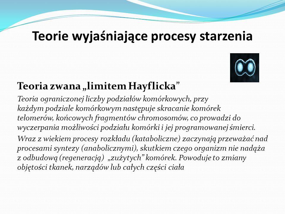 """Teorie wyjaśniające procesy starzenia Teoria zwana """"limitem Hayflicka Teoria ograniczonej liczby podziałów komórkowych, przy każdym podziale komórkowym następuje skracanie komórek telomerów, końcowych fragmentów chromosomów, co prowadzi do wyczerpania możliwości podziału komórki i jej programowanej śmierci."""
