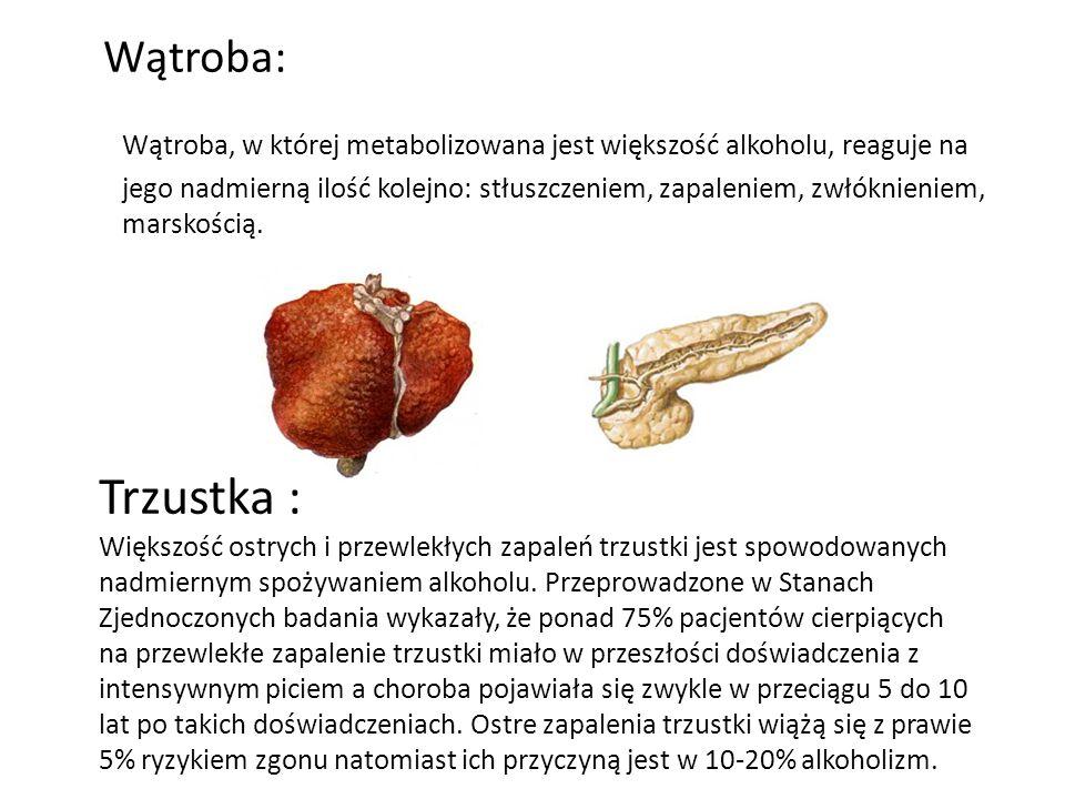 Wątroba: Wątroba, w której metabolizowana jest większość alkoholu, reaguje na jego nadmierną ilość kolejno: stłuszczeniem, zapaleniem, zwłóknieniem, marskością.