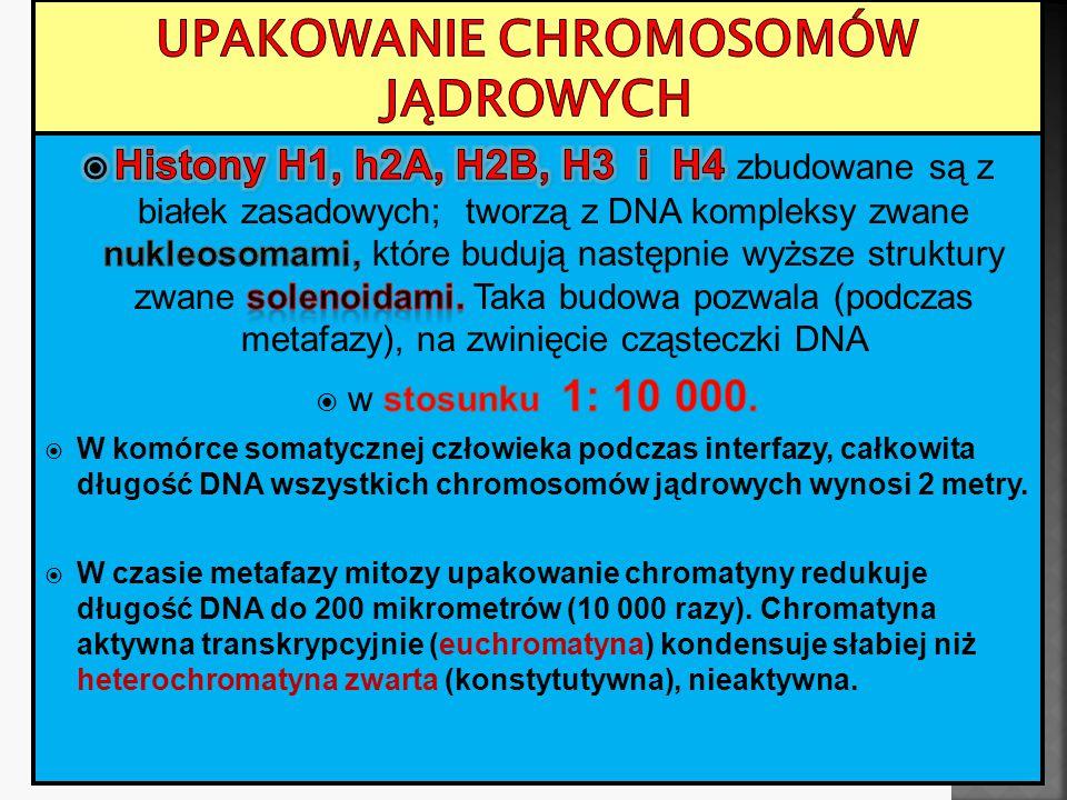 Unikatowy wzór prążków pozwala zidentyfikować każdy chromosom człowieka.