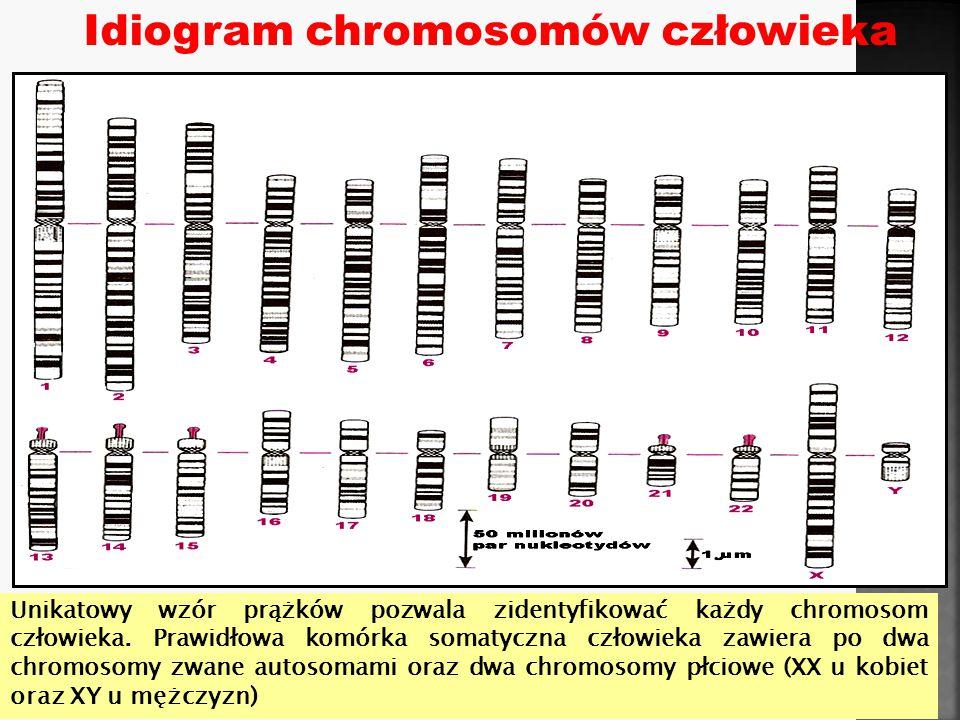 U góry: kariotypy człowieka - klasyczny oraz spektralny.