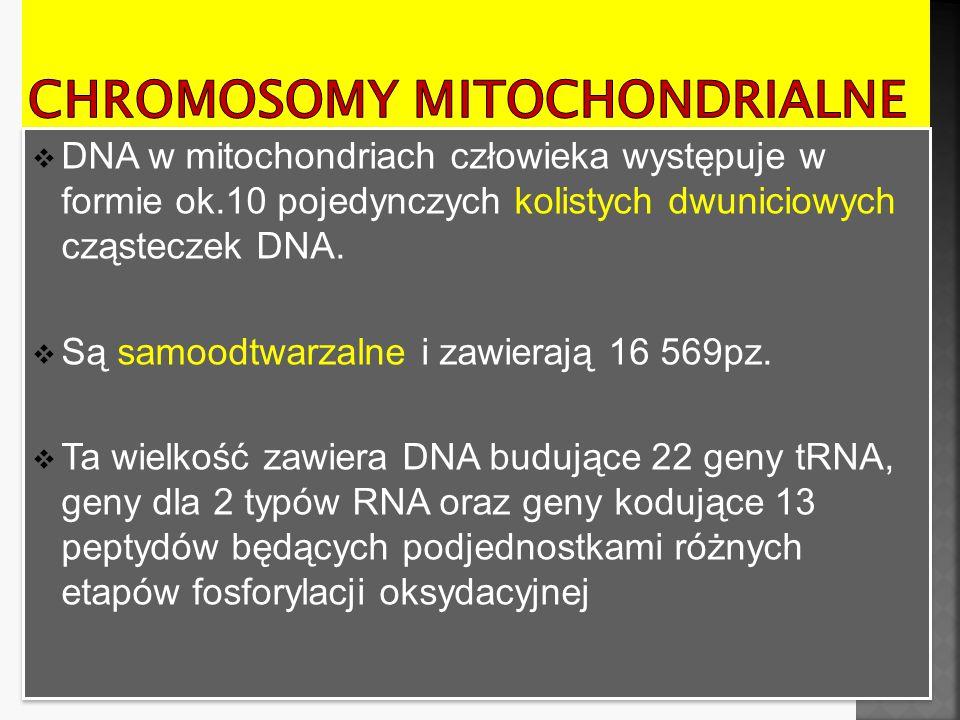  MtDNA różni się od DNA jądrowego pod względem rozpoznawania kodonów dla wielu aminokwasów (np.