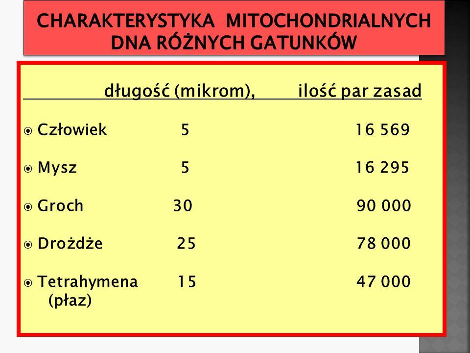 długość (mikrom), ilość par zasad  Człowiek 5 16 569  Mysz 5 16 295  Groch 30 90 000  Drożdże 25 78 000  Tetrahymena 15 47 000 (płaz)